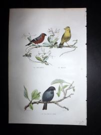 Buffon 1849 Hand Col Bird Print. Bullfinch
